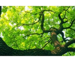 Serenity Tree Care
