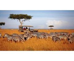 Packages for 2 Day Masai Mara Safari in Nairobi