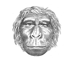 Learn What Went On In Our Hominid Ancestor'S Mind Price