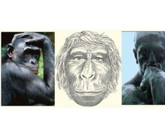 Learn What Went On Inside Our Hominid Ancestor'S Minds