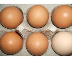 EGGS $3.50 A Dozen Fetile Eggs $5 a Dozen