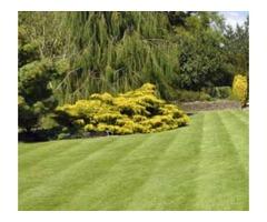 Yellow Jacket Landscaping Inc