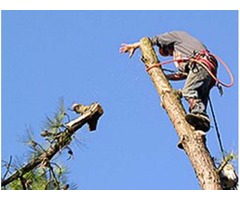 Above and Beyond Tree Service