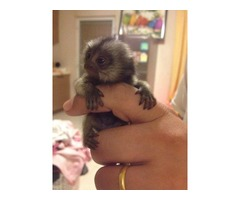 Giving out my Baby Marmoset Princess