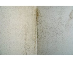 Mold Removal Service in Greenville SC