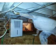 Mold Inspection and Remediation Service in Greenville SC