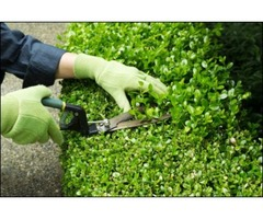 Lawn and Order is a professional team of lawn care service